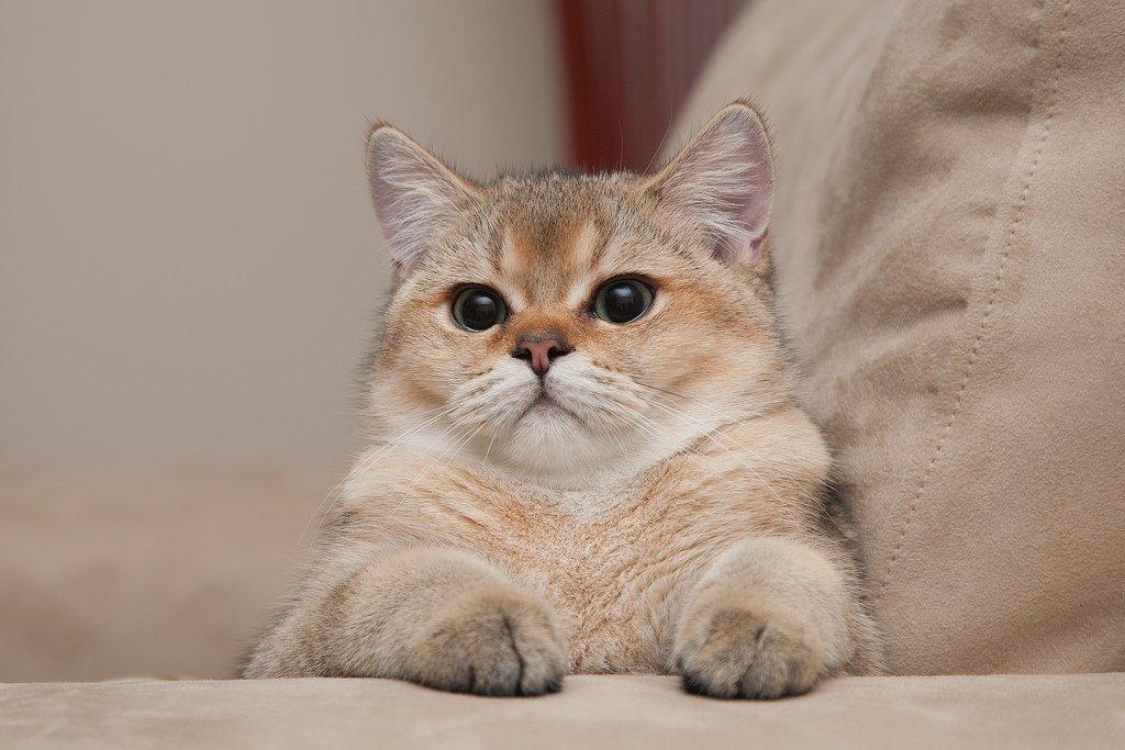 Кошка которая гуляет сама по себе фото дизайнерским решением