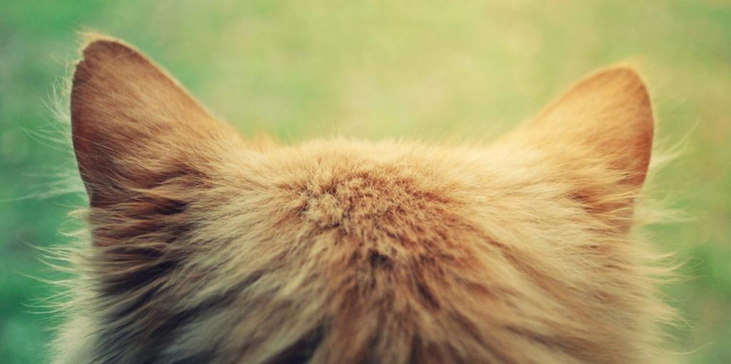 Как вылечить ушки у котенка от ушного клеща thumbnail