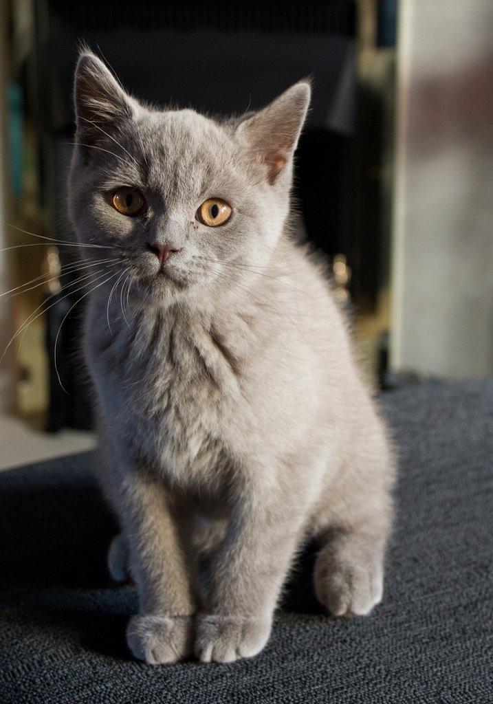 английские коты фотографии истории мэдисон-сквер-гарден зрители