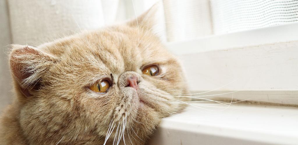 Опасное заболевание чумка у кошек симптомы лечение и профилактика