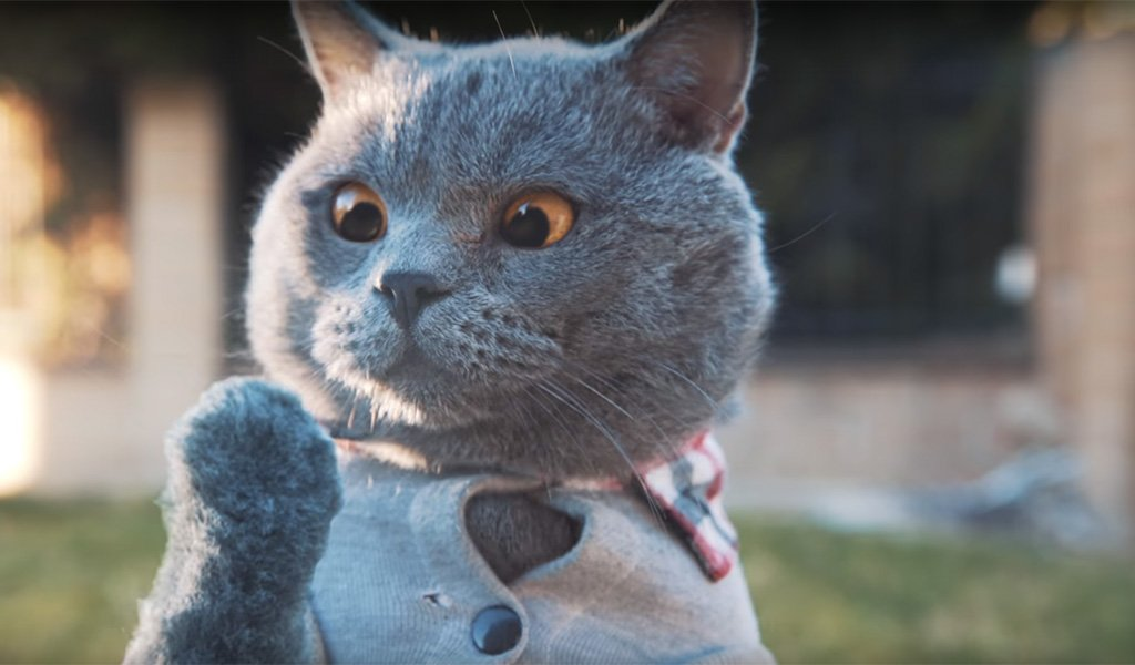 ютуб коты приколы лет крепкого