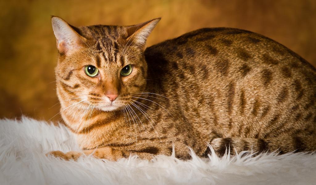 Открытка, кошки фото картинки название