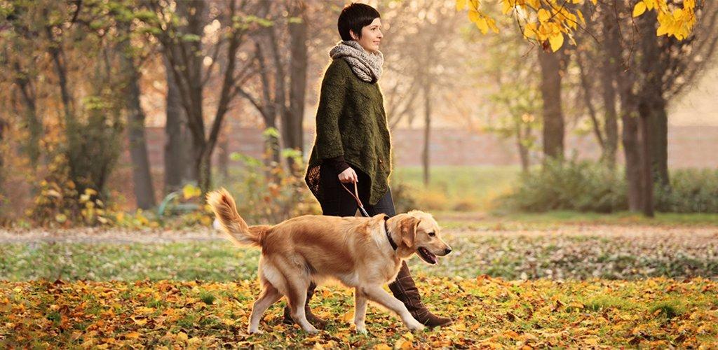 Правила выгула собак в городе: закон РФ и штрафы за нарушение