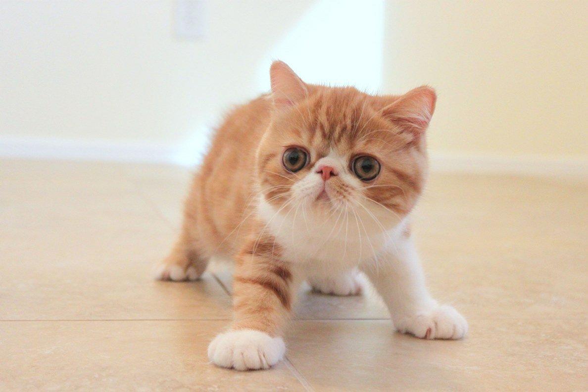 продажа больного лишаем котенка