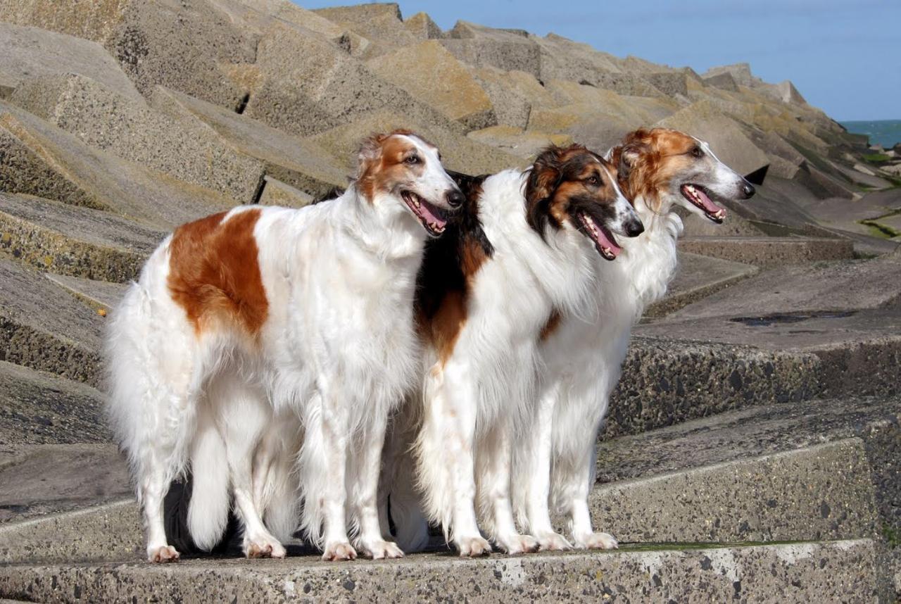 трендовую картинки собак русская борзая фото тому была пара