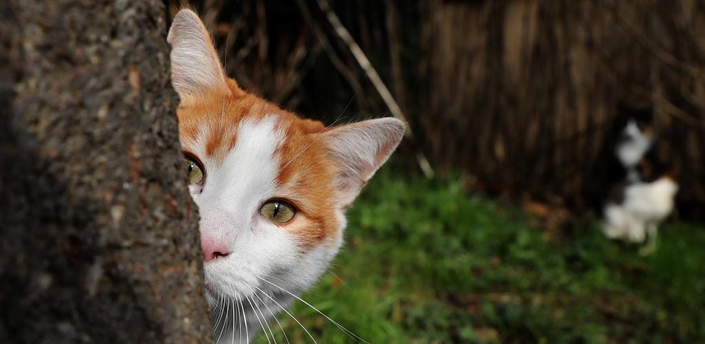 Стронгхолд для кошек: инструкция по применению препарата