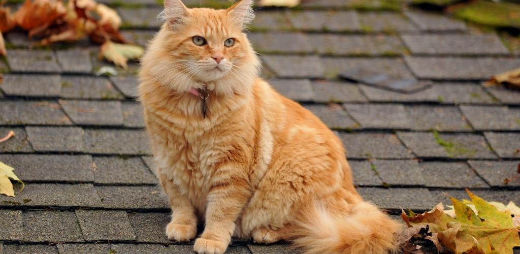Мильбемакс для кошек обзор препарата