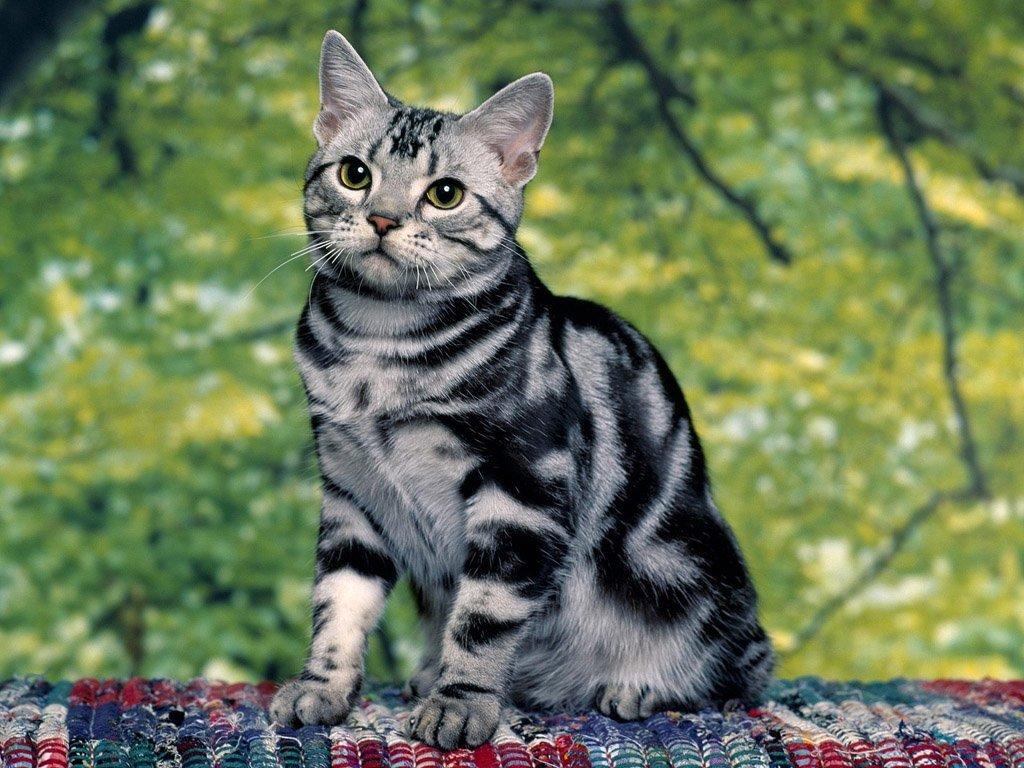 другая распечатать фото кошки место, котором
