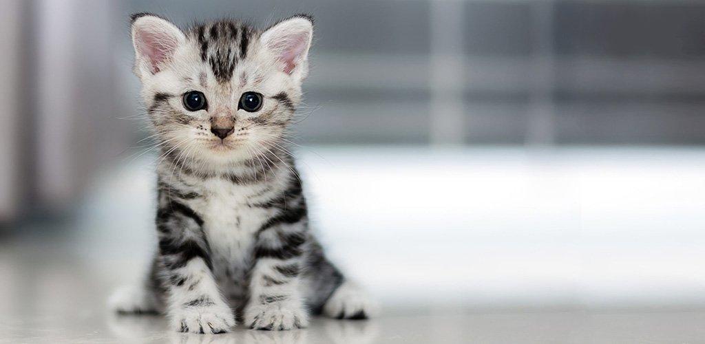 С какого возраста приучать котят к лотку