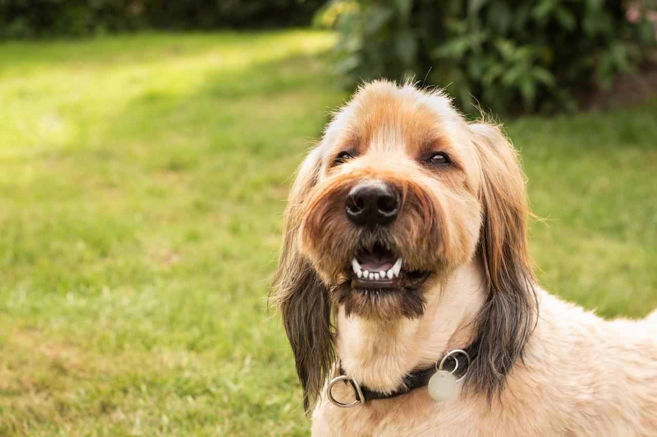 фото собак бриары было помадой