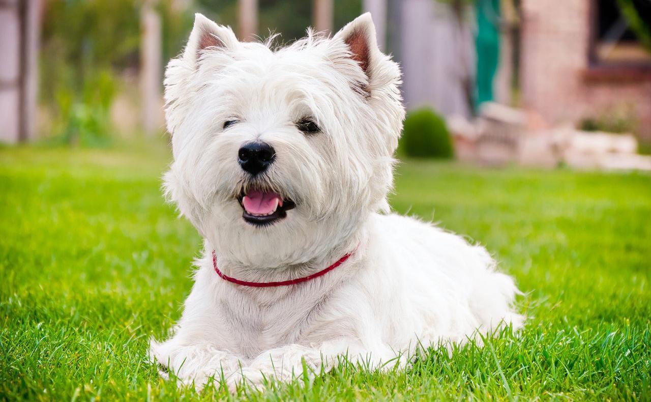Картинки с собаками вестик