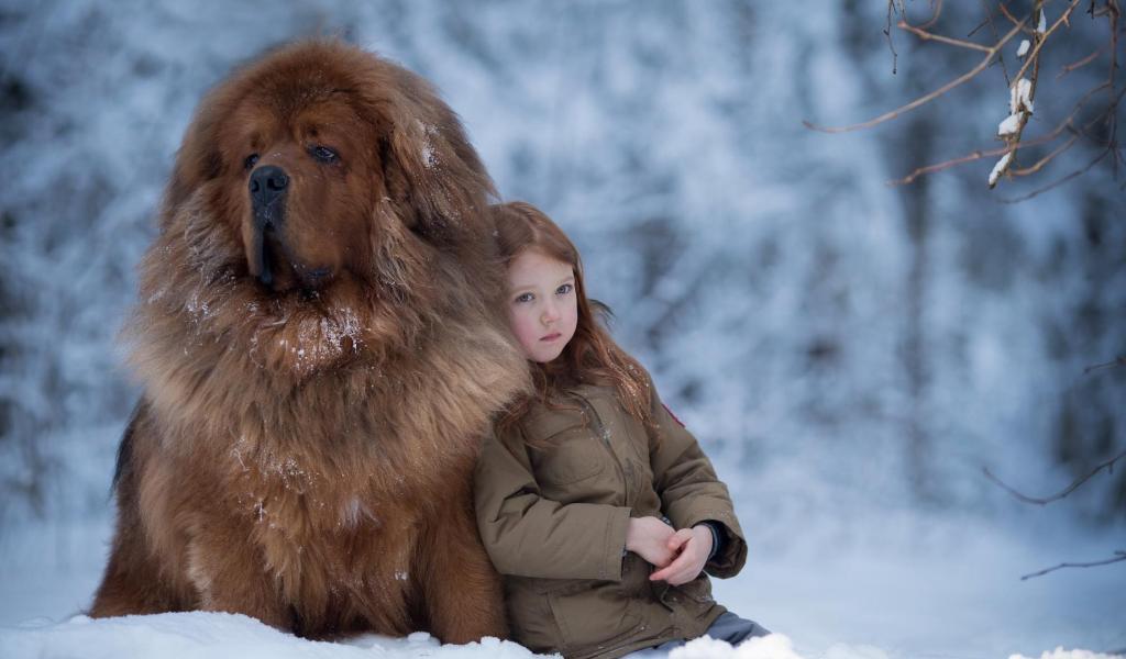 Тибетский мастиф: фото собаки, характеристика породы и как выбрать щенка