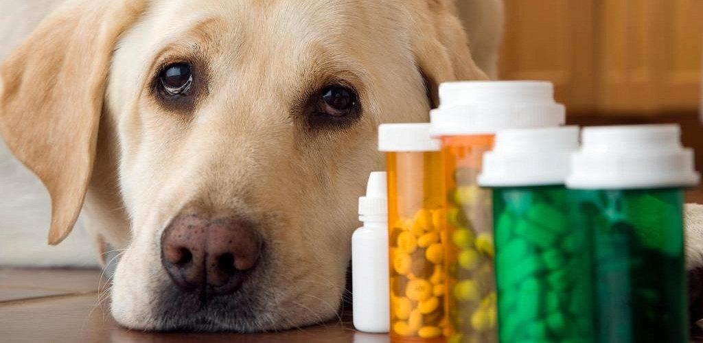 хронический цистит у собак симптомы
