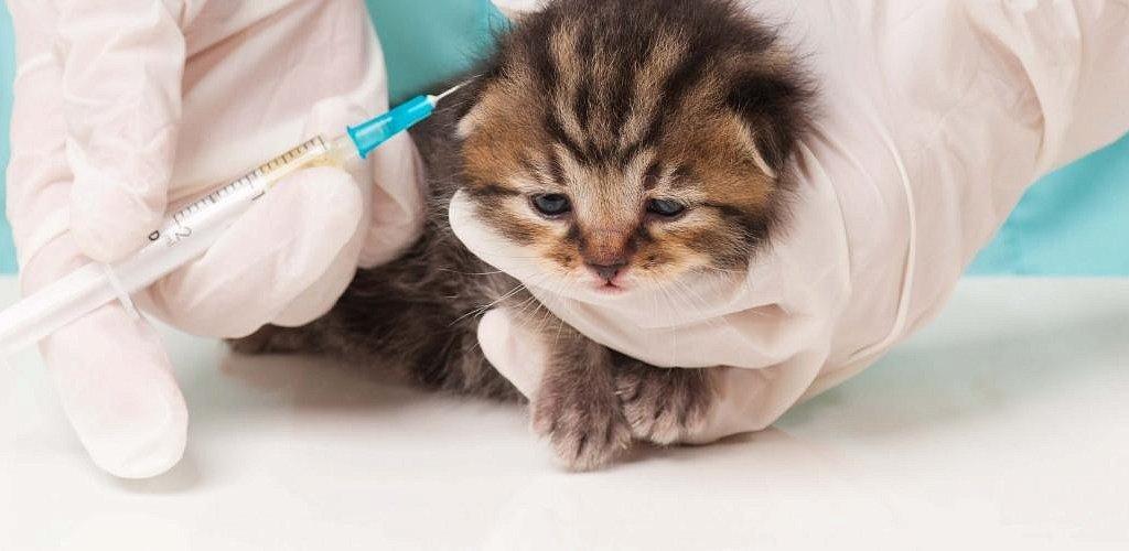 когда котятам нужно делать прививки