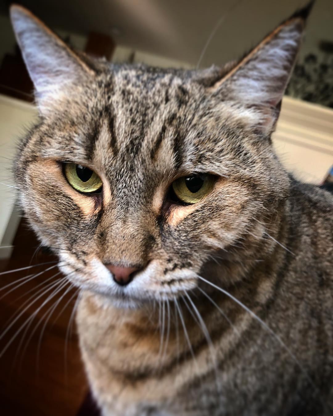 Уличный домик для кошек фото легкоатлетов обвиняют