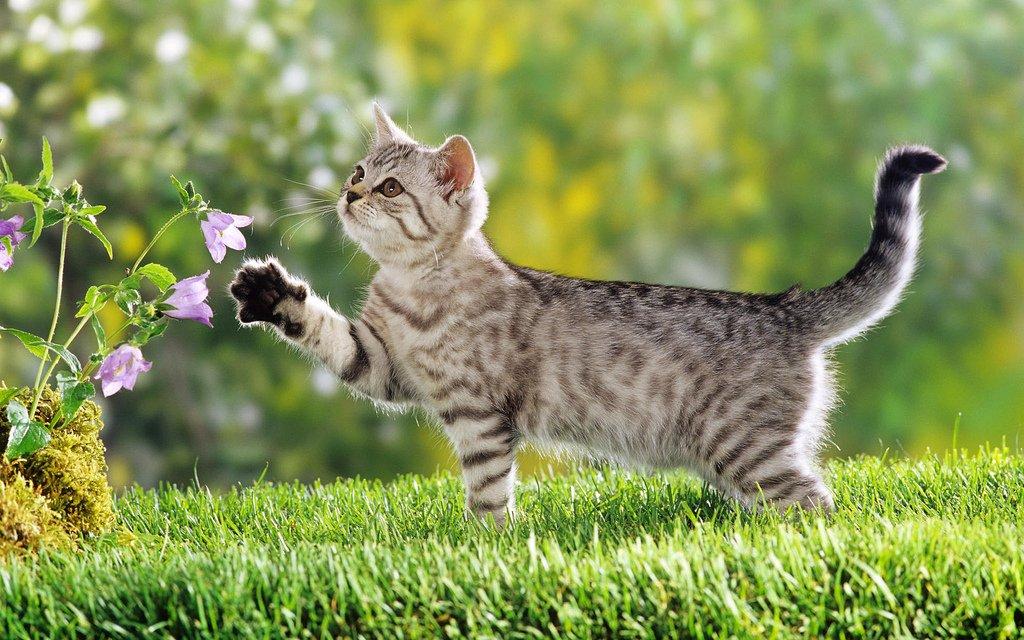 оаэ почти прикольные фото кошек фотообои венчиком или